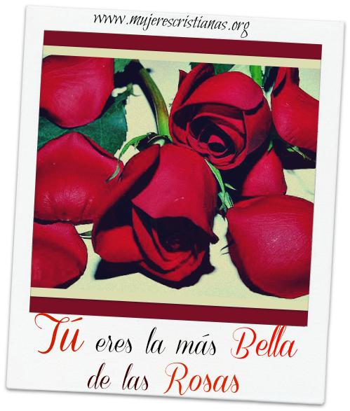 Tu eres la mas bella de las rosas