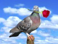 La paloma y la rosa – Angélica García